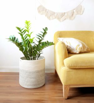 Indoor Planter Gift Ideas