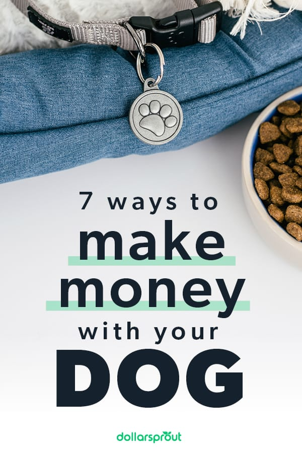how to make money with your dog, cat, or other pets