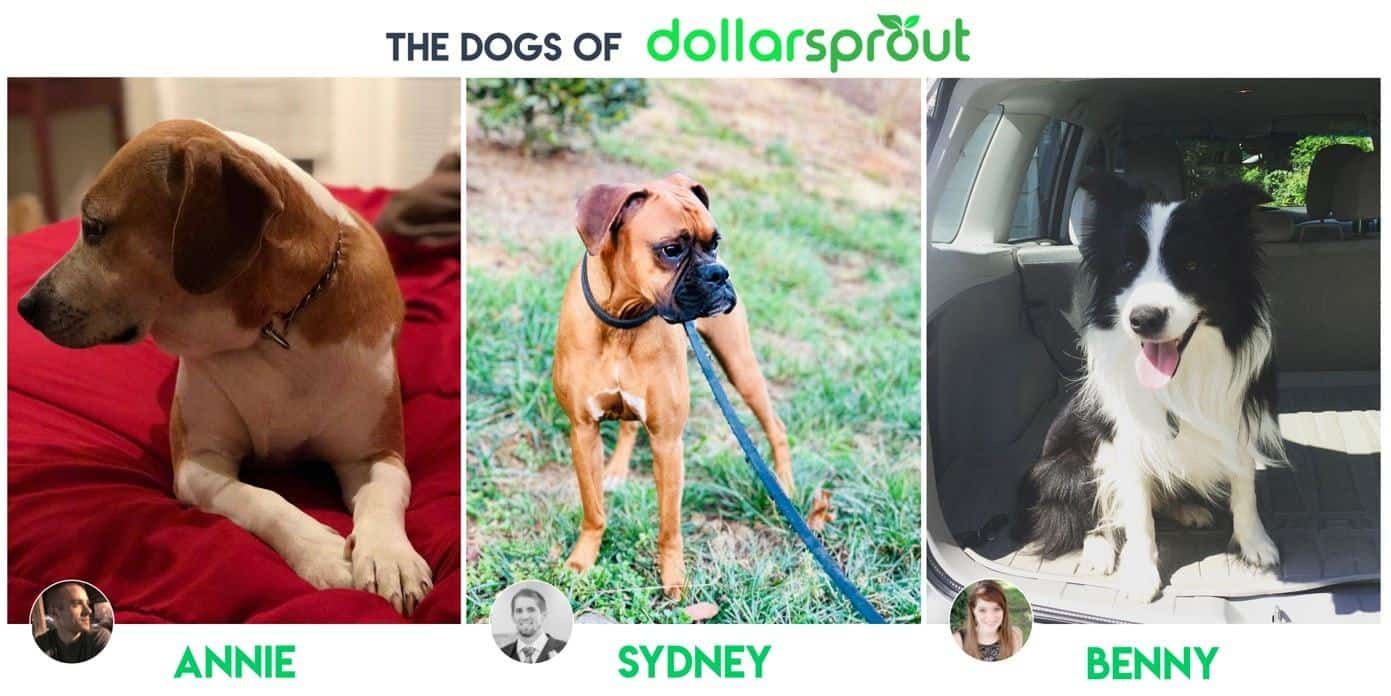 dogs that belong to the owners of DollarSprout.com